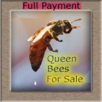 Queen Bees for Sale
