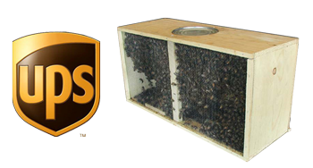 Package Bees 3lb - Delivered to Your Doorstep